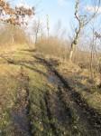 """Nature reserve """"Barkenkuhlen im Ipweger Moor"""""""