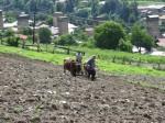 Tilling a field, Mestia