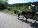 A donkey cart - a rare sight in Georgia