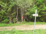 Mined forest - near Srebrenica